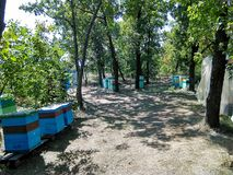 At the apiary. Photos in the landing  Bees stand near the trees. Summer honey assembly stock images