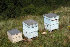 Apiary (bee garden) Stock Photos