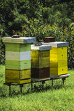 An apiary with bee hives Stock Image