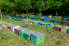 The apiary. Beehive in the forest. Apiary royalty free stock photos
