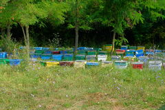The apiary. Beehive in the forest. Apiary Royalty Free Stock Photo