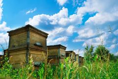 Apiary. A beehive from a tree stands on an apiary. The houses of the bees are placed on the green grass in the mountains stock photo
