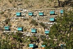 Apiary beehives Royalty Free Stock Photo