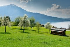 Apiary for beekeping in midst of meadows with blossoming cherry and apple trees and a great view royalty free stock photo