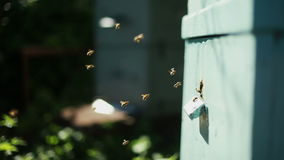 Apiary with bees stock video footage