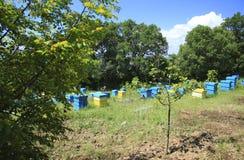 Apiary. Bulgaria, Sveti Vlas. Summer landscape. Apiary with beehives Stock Photos
