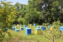 Apiary. Bulgaria, Sveti Vlas. Summer landscape. Apiary with beehives Royalty Free Stock Photography
