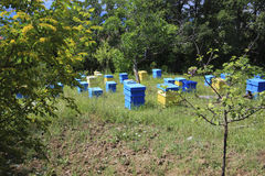 Apiary. Bulgaria, Sveti Vlas. Summer landscape. Apiary with beehives Stock Photo