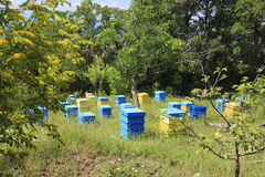 Apiary. Bulgaria, Sveti Vlas. Summer landscape. Apiary with beehives Royalty Free Stock Images