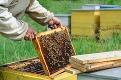 apiary El apicultor trabaja con las abejas cerca de las colmenas Apicultura imágenes de archivo libres de regalías
