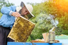 apiary El apicultor trabaja con las abejas cerca de las colmenas Apicultura imagen de archivo libre de regalías
