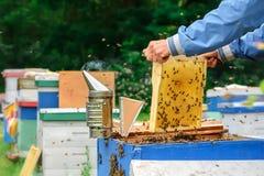 apiary El apicultor trabaja con las abejas cerca de las colmenas Apicultura Tema de la apicultura Foto de archivo