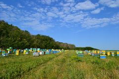 Apiary in the field. Apiary in the green field stock photography