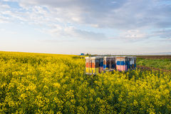 Apiary. In the field of rapeseed royalty free stock photo