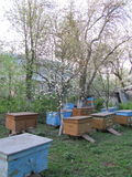 At the apiary. Flower garden. Cherry, pear, apple blossoms covered yaskravyt. Under the canopy of trees located apiary stock photos