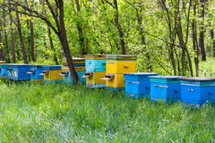 Apiary in forest Stock Photography