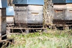 Apiary in forest Stock Images