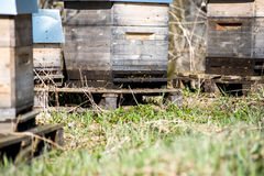 Apiary in forest Royalty Free Stock Photos