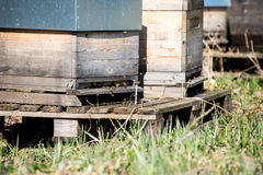 Apiary in forest Stock Image