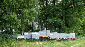 Apiary in a forest royalty free stock photography