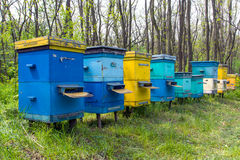 Apiary in forest Royalty Free Stock Photo