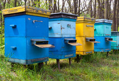 Apiary in forest Stock Photo