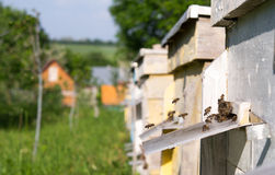 Apiary in the garden Royalty Free Stock Photo