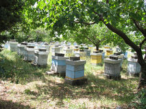 Apiary in the garden Stock Photos