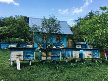 Apiary in the green forest. Against the blue sky and the blue wooden house apiary in the green forest Stock Images