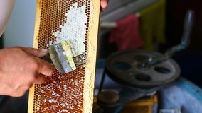 Apiary hive frame with bees wax structure full. Beekeeper is uncapping honeycomb with uncapping fork. Beekeeping concept. Authenti stock photo
