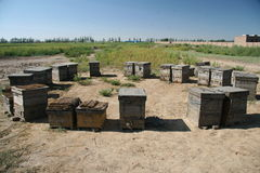 Apiary in inner mongolia China royalty free stock photos