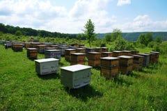 apiary Las colmenas en un colmenar con las abejas que vuelan al aterrizaje suben Apicultura fotografía de archivo