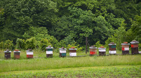 Apiary on the meadow, Montenegro. Apiary on the meadow with trees on the background, spring, Montenegro Royalty Free Stock Image