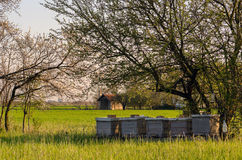 Apiary on the meadow on sunny spring day Stock Image