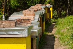 Apiary in nature. Insect in nature bee farm beekeeping hive box summer beehive agriculture honey country rural sunny natural pollination honeybee honeycomb stock image