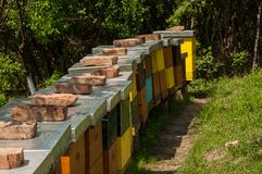 Apiary in nature. Insect in nature bee farm beekeeping hive box summer beehive agriculture honey country rural sunny natural pollination honeybee honeycomb royalty free stock photos