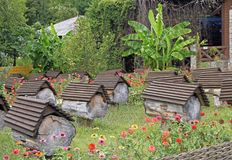 Apiary on the road to lake Ritsa. In Abkhazia royalty free stock images