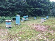 Apiary. Small scale apiary Royalty Free Stock Photography
