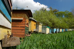 Apiary in springtime Royalty Free Stock Photography