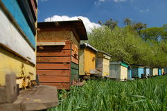 Apiary in springtime Stock Photos