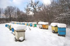 Apiary in wintertime Stock Photography