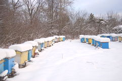 Apiary in wintertime. Beehives covered with snow in wintertime Stock Image
