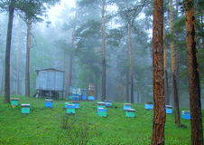 Apiary in the wood. Early in the morning the dense fog fell in the wood Stock Photo