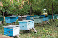 Apiary in the woods. Evidence from the bees are in a clearing in the woods Royalty Free Stock Photos