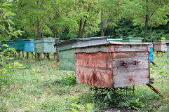 Apiary in the woods. Evidence from the bees are in a clearing in the woods Stock Photography