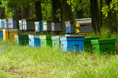 Apiary. In the woods with wooden walruses Stock Photo