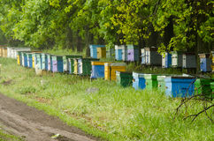 Apiary. In the woods with wooden walruses Stock Photos