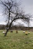 Apiary yard with bee hives in the autumn. stock photo
