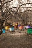 apiaryområdeslipetsk Arkivfoton