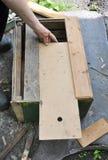 Apicoltore che costruisce trappola di legno per le api selvagge o per le api di sciame Honey Bees Trap per il bloccaggio uno scia Fotografia Stock